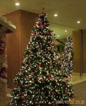 20041223_tree