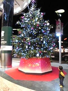 やっぱり夜のクリスマスツリーはキレイ☆