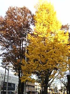 秋も一瞬で過ぎて・・・